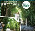 備瀬のフクギ並木(びせのふくぎなみき)